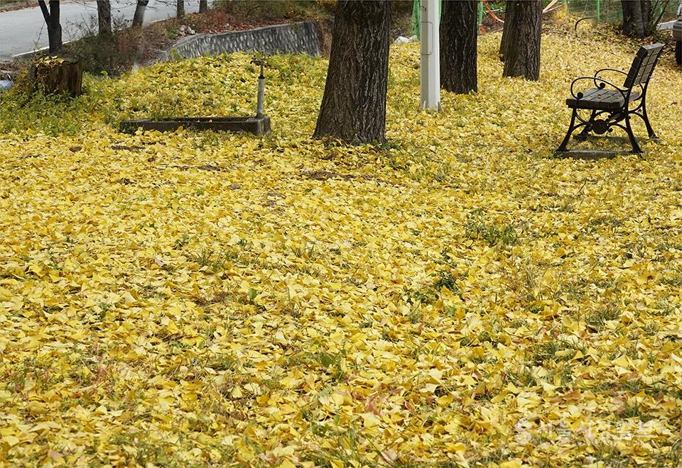 ▲ 헐리어진 초등학교 교정으로 은행잎이 지고, 혼자여서 어울리는 빈 의자가 정겹다.